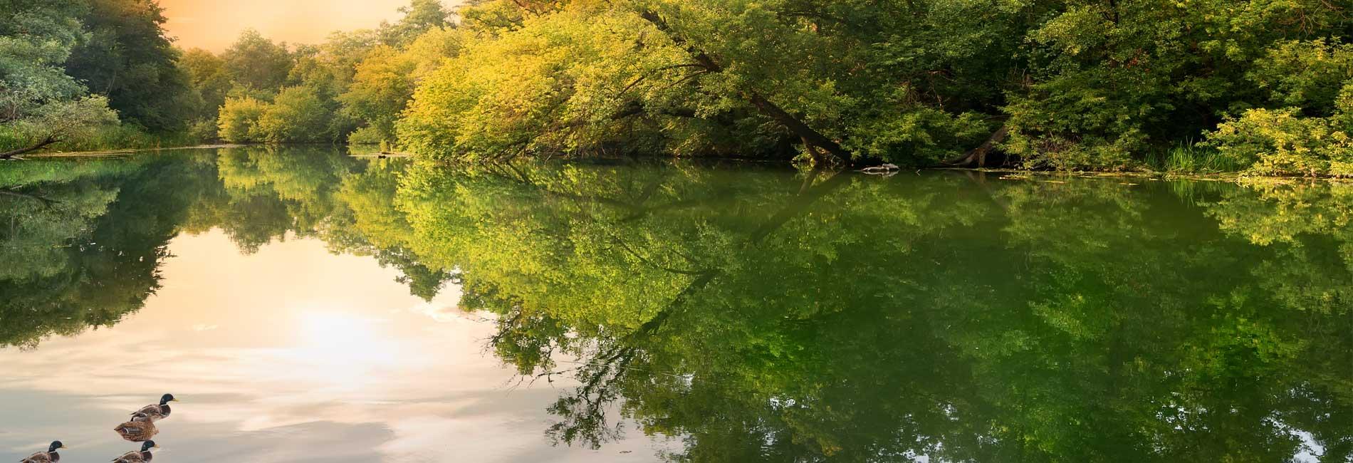Water Duck Scene